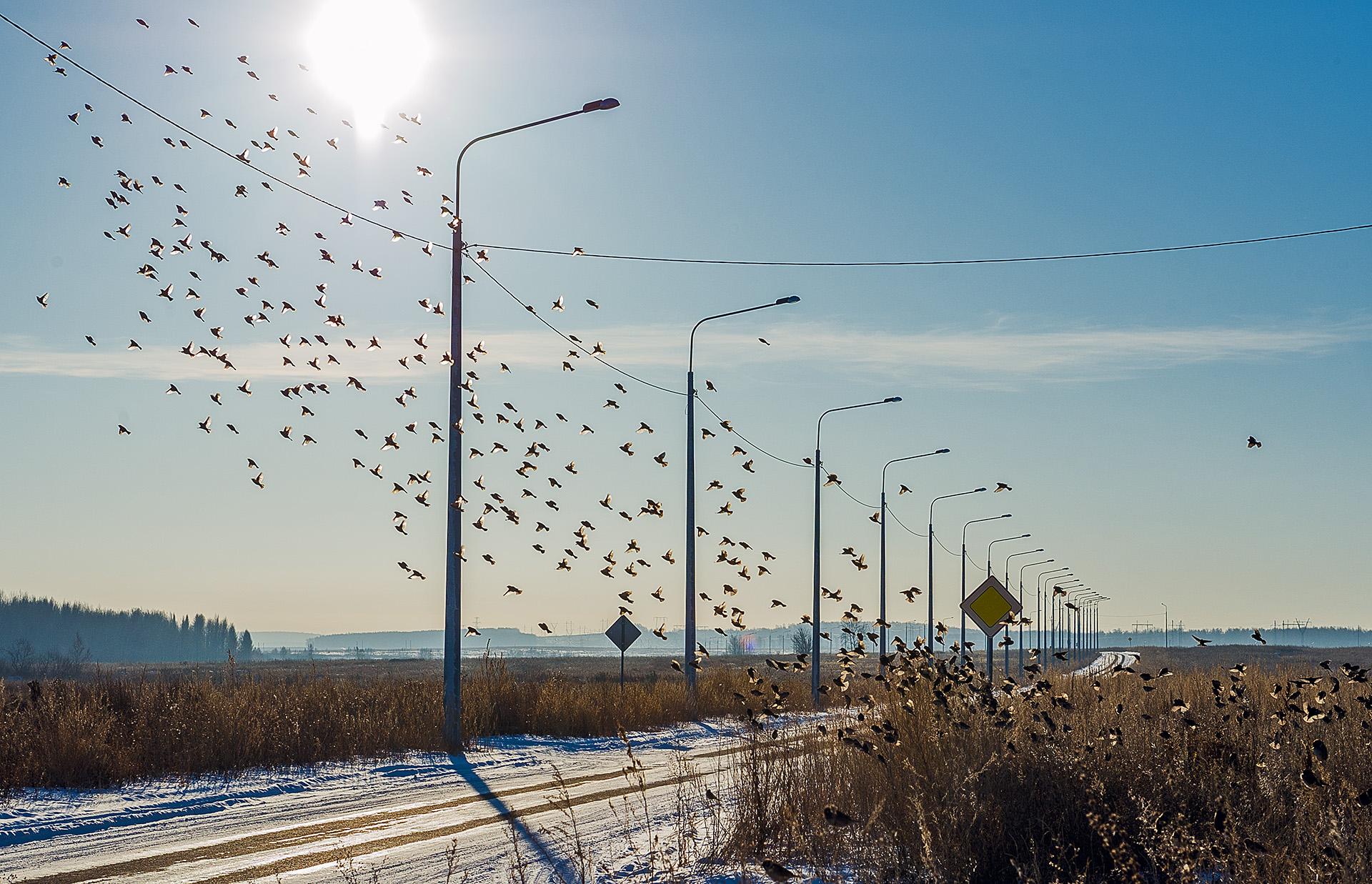 Кто воробьёв в Челябинске потерял?