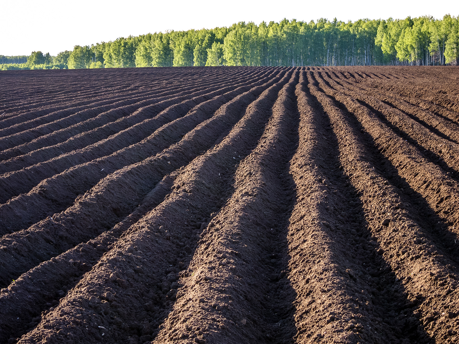 Китайцы картошку посадили
