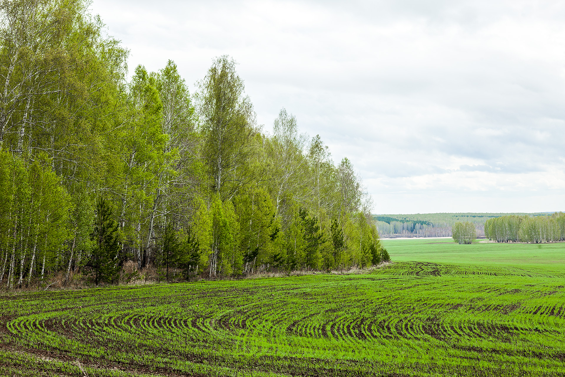 Лес и поле