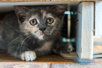 Знаменитый кот Шрёдингера всё ещё жив!